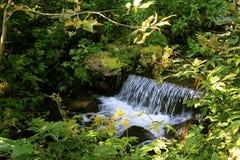 Les bosquets autour de la petite eau cascadent sur le ruisseau de forêt au ressort Photographie stock libre de droits