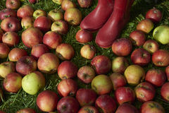 Les bottes des enfants dans les pommes rouges de chute se situe dans l'herbe Photographie stock libre de droits