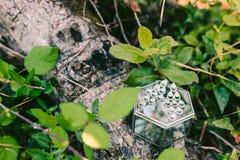 Les boucles d'oreille du ` s de jeune mariée sur une boîte en verre se trouvent sur un arbre Images stock