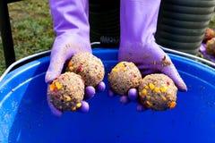 Les boules de l'amorce Image stock