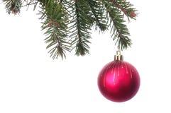 Les boules rouges de Noël sur le sapin vert s'embranchent Fond blanc Photo libre de droits