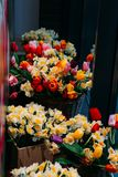 Les bouquets des jonquilles jaunes et des tulipes rouges se tiennent dans des lits de fleur sur un étalage en verre photos stock