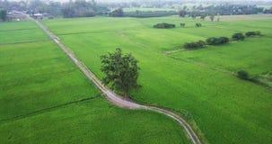 Les bourdons de vue aérienne volent autour des arbres et le long du sentier piéton près de deux rizières banque de vidéos