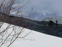 Les bourgeons d'arbre s'accrochent à la vie par la rivière neigeuse Wassen, Suisse Photographie stock libre de droits