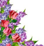 Les bourgeons des roses de fleurs Photo libre de droits