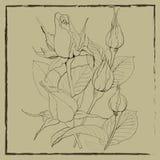 Les bourgeons des roses - illustration de vecteur Employez les matériaux imprimés, signes, articles, sites Web, cartes, affiches, Photographie stock libre de droits