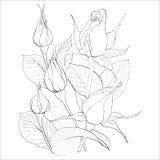 Les bourgeons des roses - illustration de vecteur Employez les matériaux imprimés, signes, articles, sites Web, cartes, affiches, Photo libre de droits
