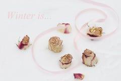 Les bourgeons et les pétales sont les roses blanches et rouges Photo stock
