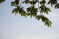 Les brances verts d'arbre encadrent le coin avec la fusée de ciel bleu et de soleil à b images libres de droits