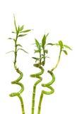 les branchements en bambou ont isolé Photographie stock libre de droits
