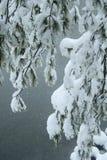 les branchements ont couvert la neige de pin Photographie stock libre de droits