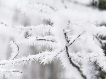 Les branchements sont dans une gelée Image stock