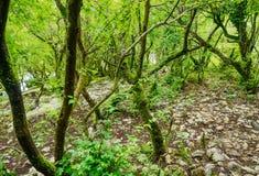 Les branches couvertes de mousse des arbres après la pluie dans le humidité élevé de forêt Fond de nature photographie stock libre de droits