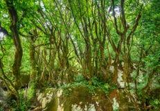 Les branches couvertes de mousse des arbres après la pluie dans le humidité élevé de forêt Fond de nature images stock