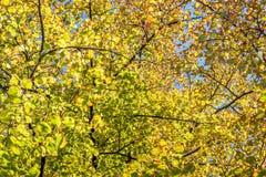 Les branches d'arbre avec le vert part de l Photographie stock libre de droits