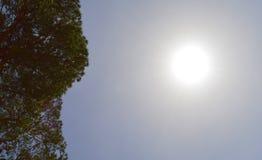 Les branches d'automne de pin du soleil de vent de ressort d'aiguille de pin de paysage de conifère opacifient le summe vert-bleu Photographie stock