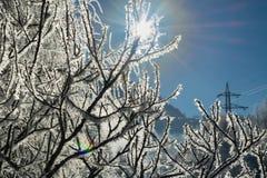 Les branches d'hiver des arbres en gelée brillent au soleil Photo stock