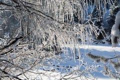 Les branches d'hiver des arbres en gelée brillent au soleil Images stock