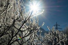 Les branches d'hiver des arbres en gelée brillent au soleil Photo libre de droits