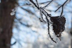 Les branches d'hiver des arbres en gelée brillent au soleil Photographie stock