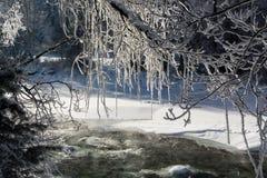 Les branches d'hiver des arbres en gelée brillent au soleil Photos libres de droits