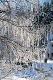 Les branches d'hiver des arbres en gelée brillent au soleil Images libres de droits