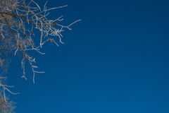 Les branches d'hiver des arbres en gelée brillent au soleil dans la perspective du ciel bleu Image stock