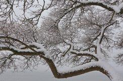 Les branches d'un arbre couvert de première neige Photographie stock libre de droits