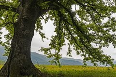Les branches d'un chêne, des wildflowers, et des montagnes dans la crique de Cades images stock