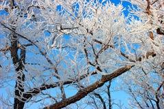 Les branches de l'arbre sont couvertes de parc de ville de gelée Le gel de matin, humidité image stock