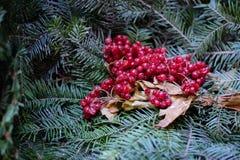 Les branches de la décoration de Noël de sapin et de viburnum Photographie stock