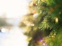 Les branches de sapin miroitant sur le soleil Photo libre de droits