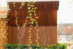 Les branches de saule aiment le soie-saule en mars Images libres de droits