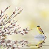 Les branches de saule et l'oiseau de chant se sont reflétés dans l'eau photo libre de droits
