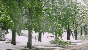 Les branches des arbres avec les feuilles vertes de ressort se sont cassées sous le poids de la neige et du vent humides Anomalie banque de vidéos