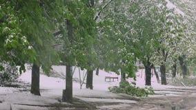 Les branches des arbres avec les feuilles vertes de ressort se sont cassées sous le poids de la neige et du vent humides Anomalie clips vidéos