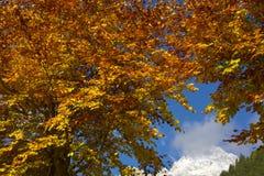 Les branches des arbres complètement de couleurs Image stock