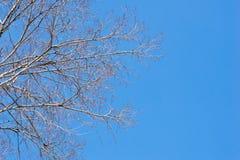 Les branches du ciel image libre de droits
