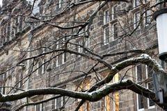 Les branches foncées envahies créent un appereance fantasmagorique images stock