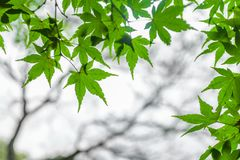 Les branches l'automne image stock