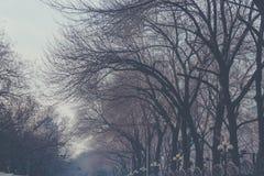 Les branches nues de bel arbre abstrait se sont entrelacées sans congé Images stock
