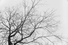 Les branches silhouettent dans la vue inférieure de ciel d'isolement Fond blanc Aucunes lames Branches sans feuilles images stock