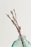 Les brindilles de saule de chat en verre vert cognent le vase sur le fond blanc photos libres de droits