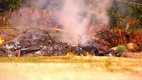 Les brindilles et les feuilles sèches brûlent dans le feu de camp vidéo clips vidéos