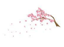 Les brins du cerisier fleurit Sakura Image stock