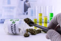 Les brucelles tiennent le bourgeon de cannabis images libres de droits
