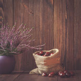 Les bruyères dans des pots et des marrons d'Inde en céramique dans un jute mettent en sac Photographie stock libre de droits