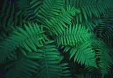 Les buissons de fougère se développent dans la forêt images libres de droits