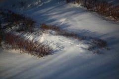 Les buissons sous la neige Photographie stock libre de droits