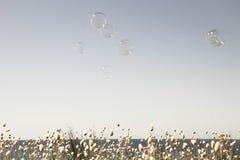 Les bulles flottant à travers un ciel vide d'été avec une bande des lapins fleurissants coupent la queue le bord d'herbes en bas Photographie stock libre de droits